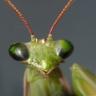 entomolojules