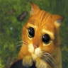Mon chat Fiorella