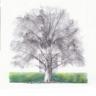 arbresenblog